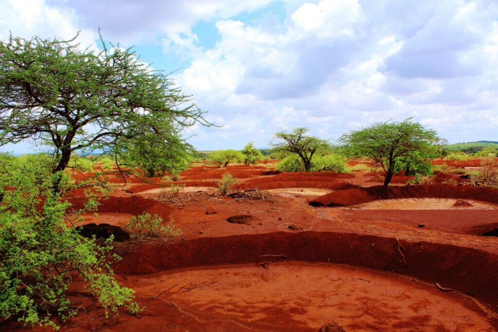 JustDiggit; Kenia bunds